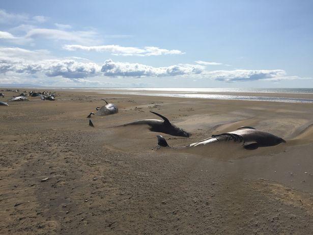 киты погибли