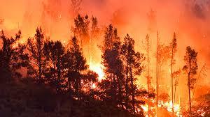 лес горит