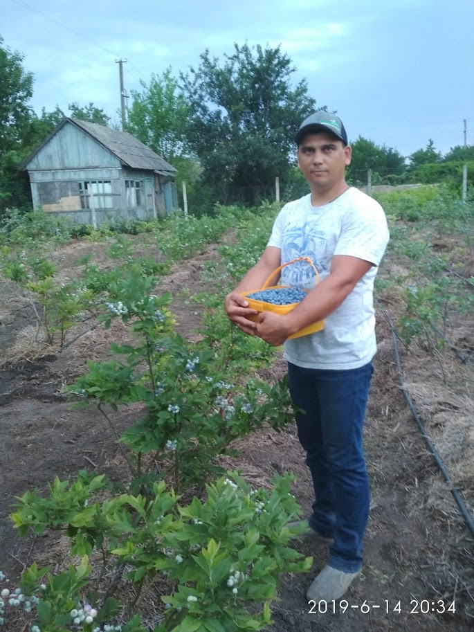 Андрей Петков фисташковый сад