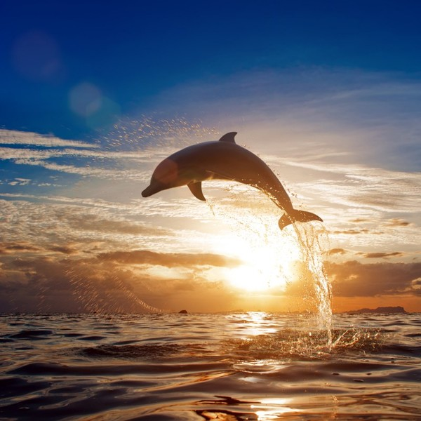 дельфин.