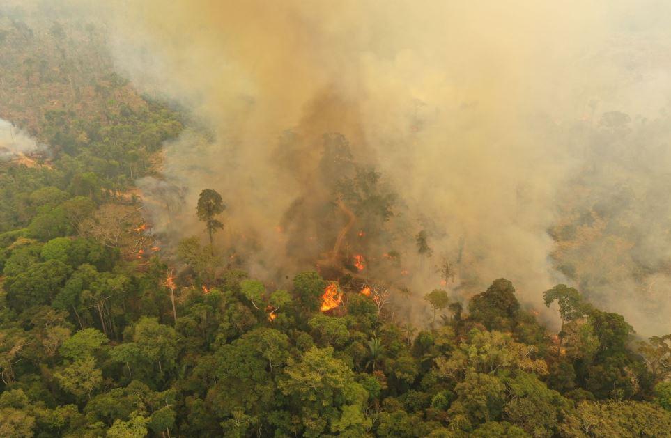 лесной пожар Бразилия