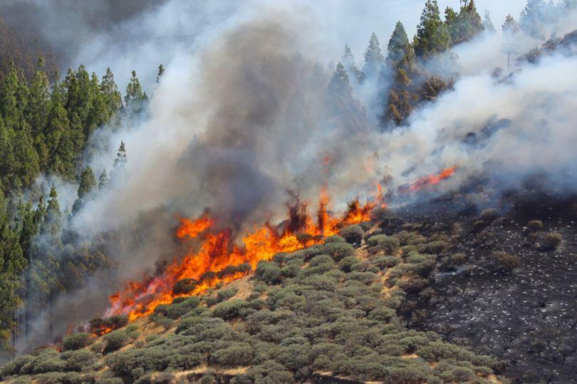 пожар на Канарах
