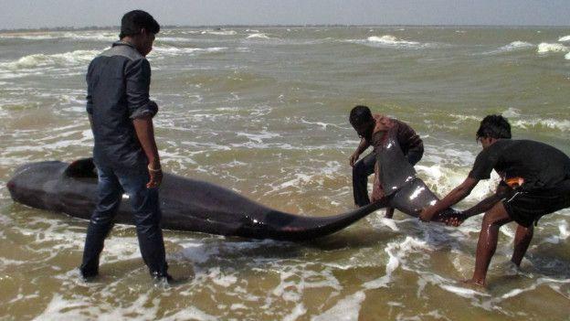 дельфины - самоубийство