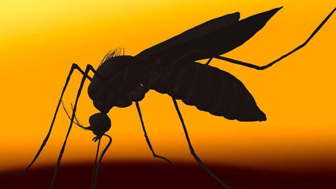 комар смертельный укус