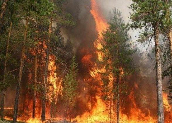 лес огонь деревья
