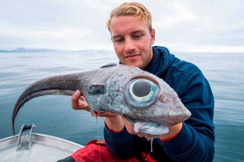 рыба в Северном море