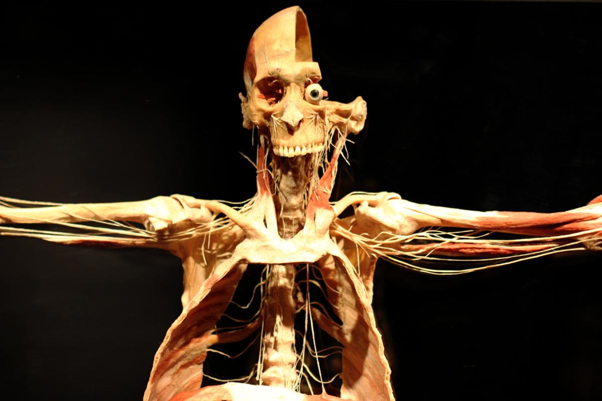 Выставка тел