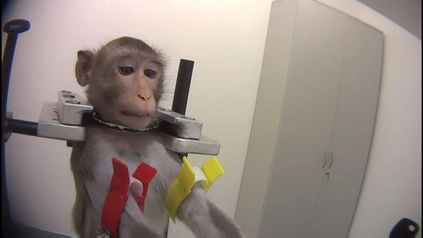 издевательства над обезьяной
