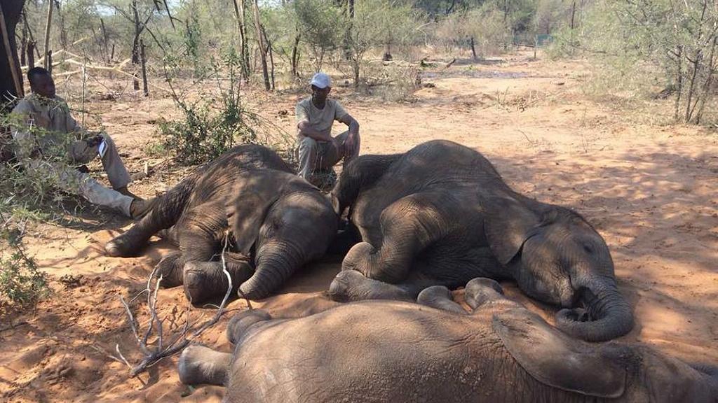 погибли слоны