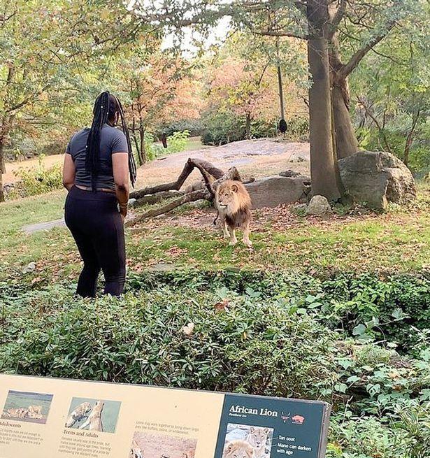 зоопарк США