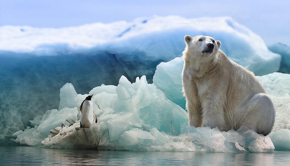 белый мдведь