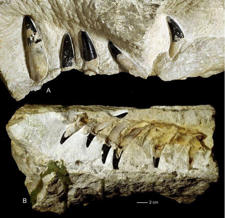 челюсть чудовища