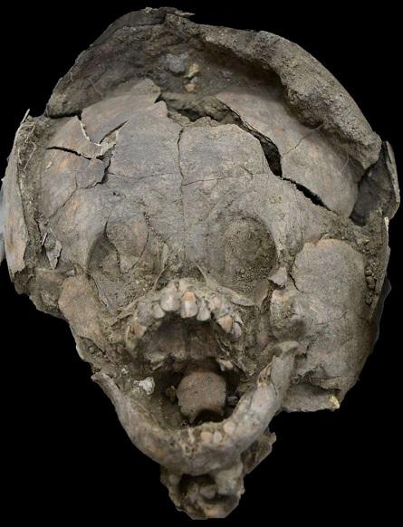 череп, найденный в Эквадоре