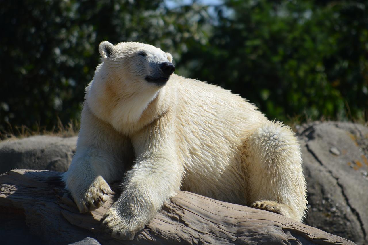 В немецком зоопарке одних животных могут скормить другим