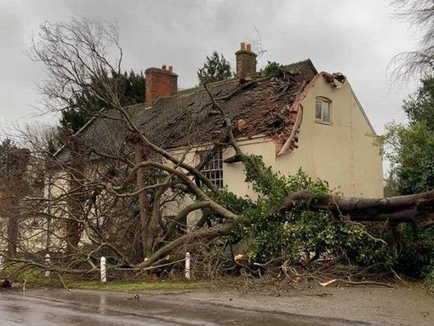 рухнувшее дерево