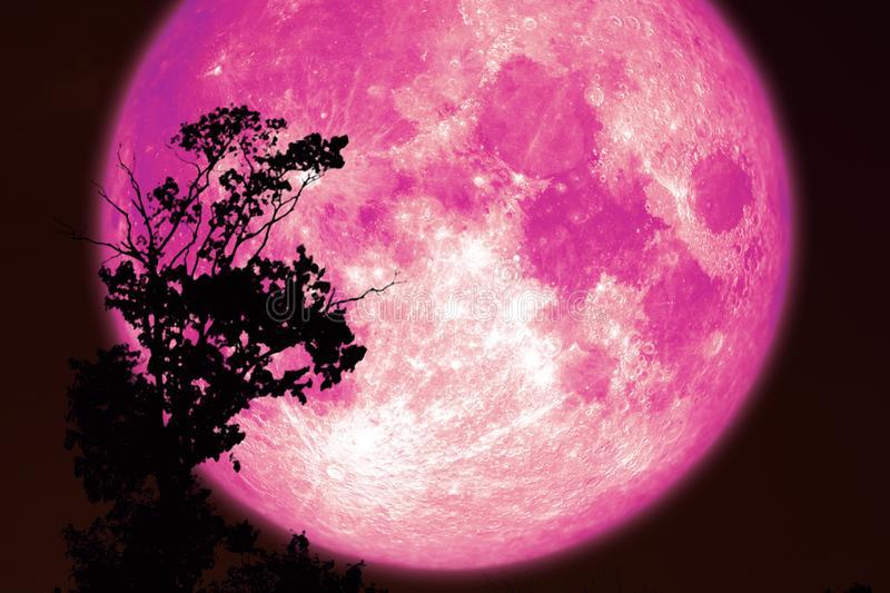 розовая луна