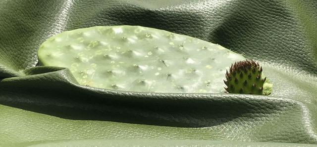 Мексиканцы разработали экокожу из кактуса опунция