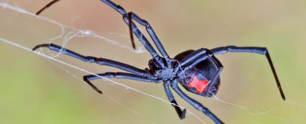Пожелав стать «человеком-пауком», чуть не погибли дети