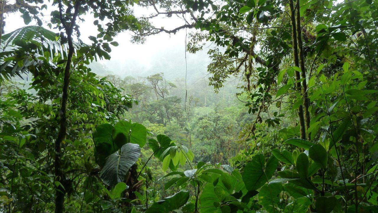 джунгли.