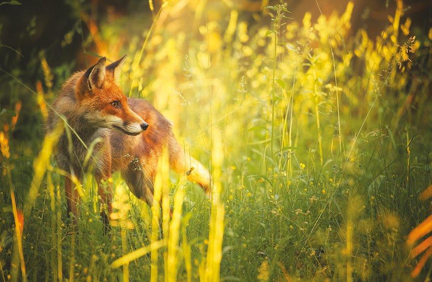 Флора и фауна Европы