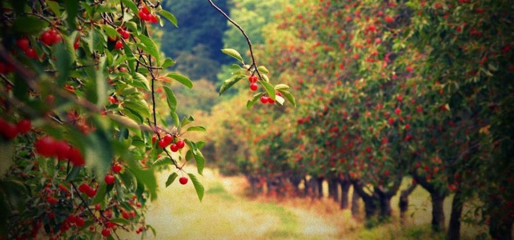 фруктовые сады