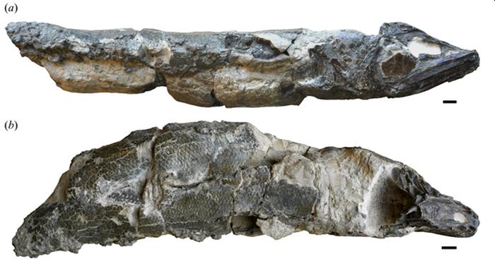 окаменелости анчоусов