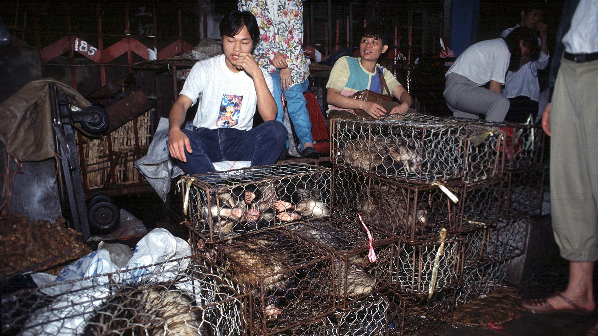 Китайский Ухань объявили заповедником дикой природы