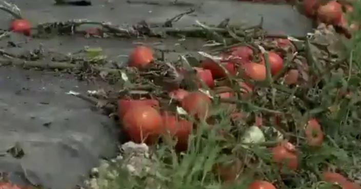 уничтожение урожая