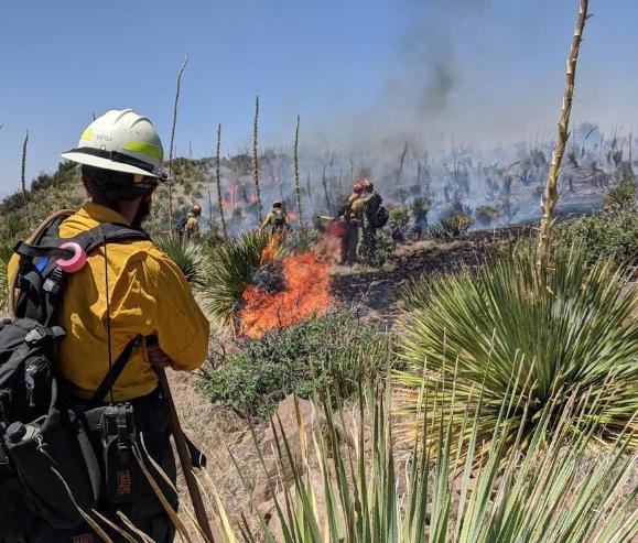 В США бушуют лесные пожары, эвакуированы тысячи людей