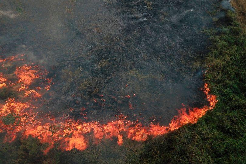 пожар в Амазонии