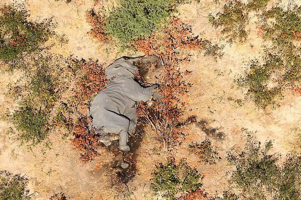 слоны Африка