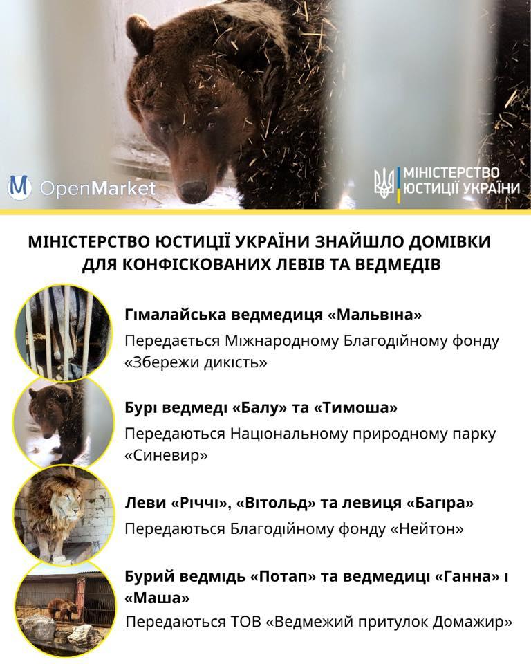 животные в хороших руках