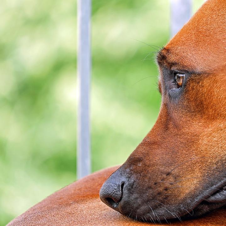 Ким Чен Ын начал войну с собаками: приказал всех их конфисковать