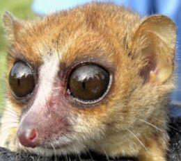 В тропических лесах Мадагаскара учёные нашли новый вид животных