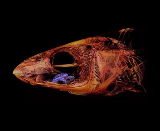 паразит в теле рыбы