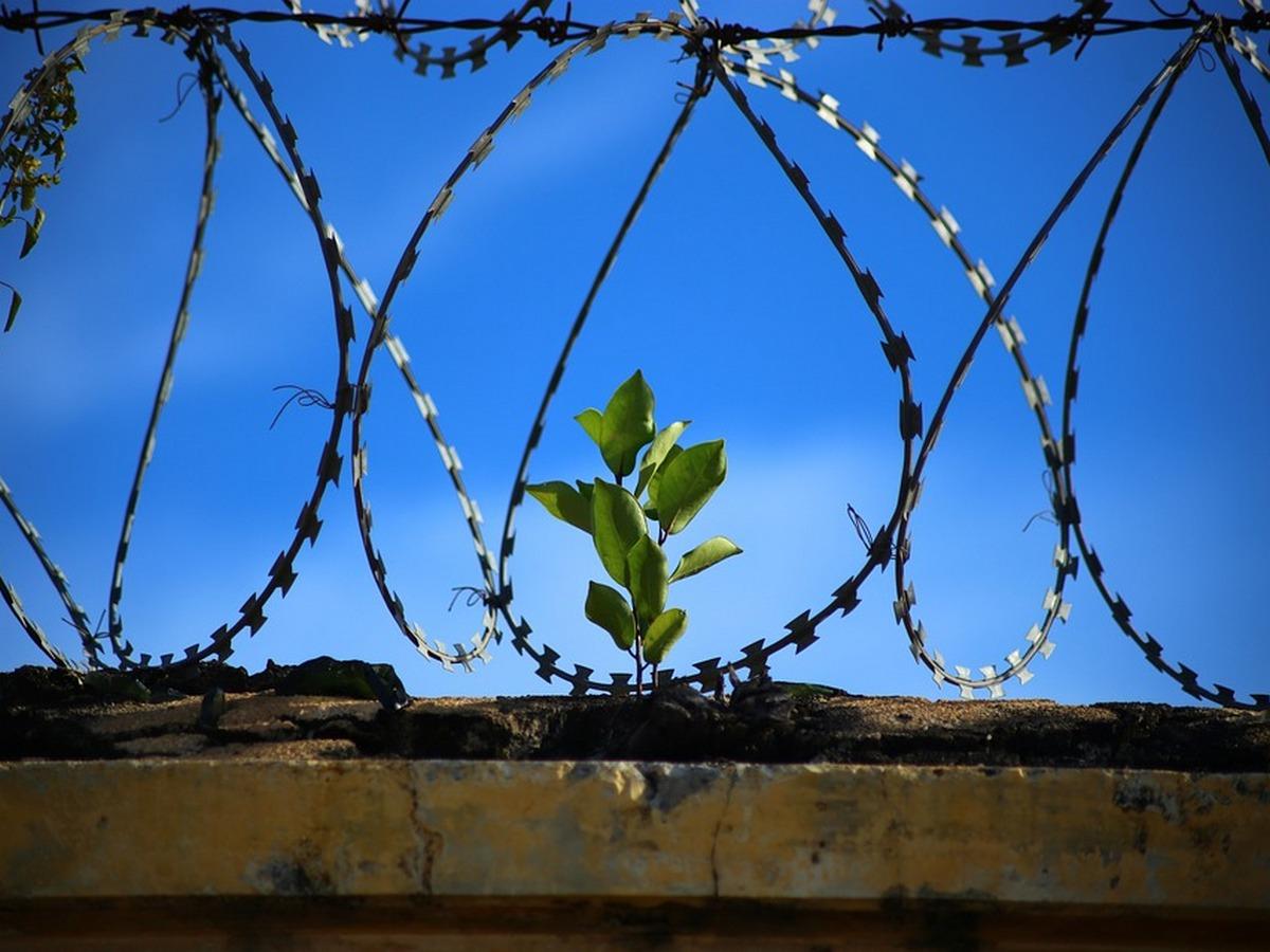 модельная тюрьма