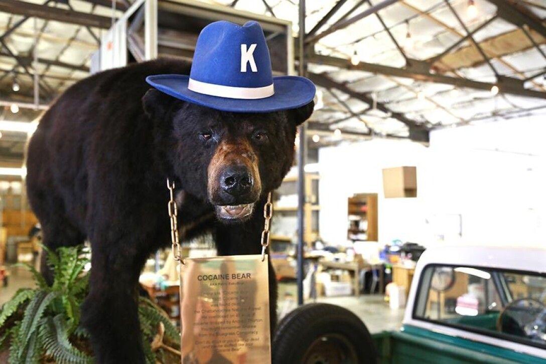 Кокаиновый медведь