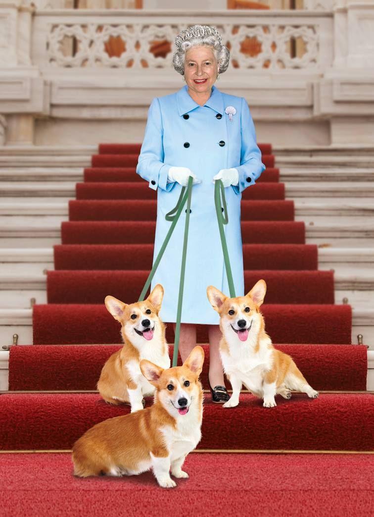 щенки королева